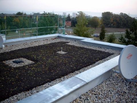 Meisterdach online Flachdach mit Kiesstreifen und frisch angepflanzter Begrünung